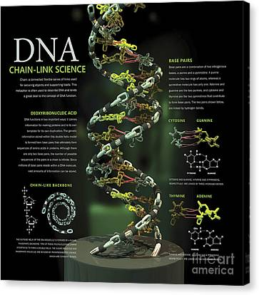 3d Poster Illustration Of Dna Canvas Print by Nicholas Mayeux