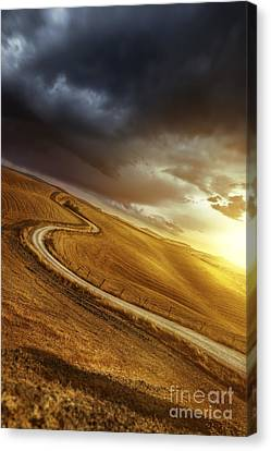 A Country Road In Field At Sunset Canvas Print by Evgeny Kuklev