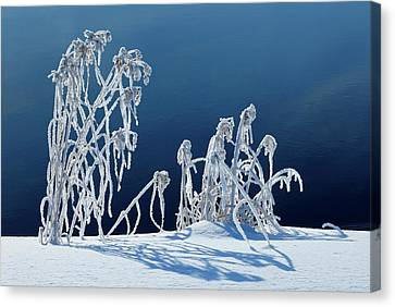Canada, Manitoba, Whiteshell Provincial Canvas Print by Jaynes Gallery