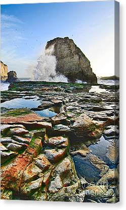 Dramatic View Of Shark Fin Cove In Santa Cruz California. Canvas Print by Jamie Pham