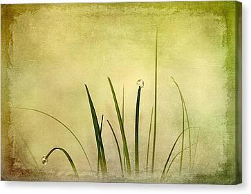 Grass Canvas Print by Svetlana Sewell