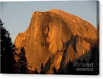 Half Dome, Yosemite Np Canvas Print by Mark Newman