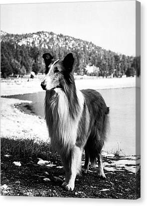Lassie Canvas Print by Retro Images Archive