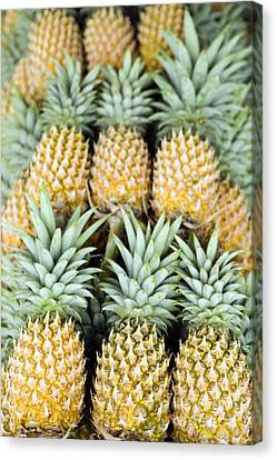 Organic Pineapple Canvas Print by Kevin Miller