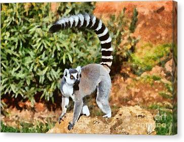 Ring Tailed Lemur Canvas Print by George Atsametakis