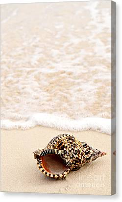Seashell And Ocean Wave Canvas Print by Elena Elisseeva