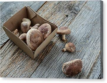 Shitake Mushroom In Cardboard Packaging On Wood Background Canvas Print by Brandon Bourdages