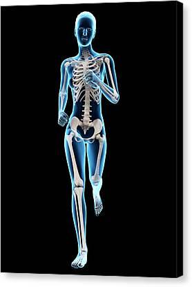 Skeletal System Of A Runner Canvas Print by Sebastian Kaulitzki