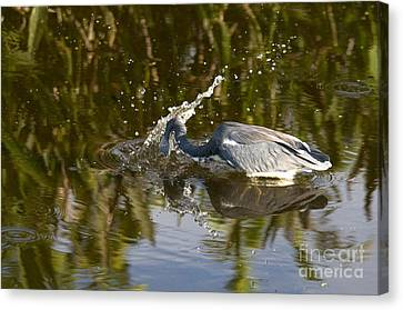 Tricolored Heron Canvas Print by Mark Newman