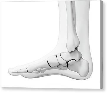 Human Foot Bones Canvas Print by Sebastian Kaulitzki