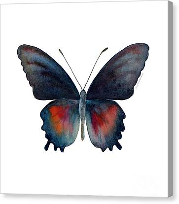 49 Parides Orellana Butterfly Canvas Print by Amy Kirkpatrick