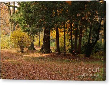 Autumn Canvas Print by Angela Doelling AD DESIGN Photo and PhotoArt