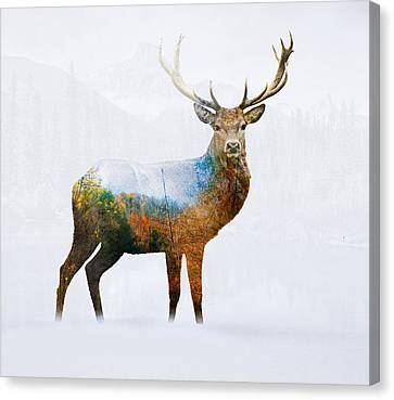 Deer Canvas Print by Mark Ashkenazi