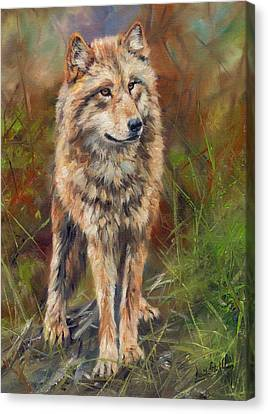 Grey Wolf Canvas Print by David Stribbling