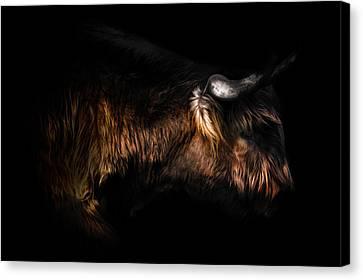 Highland Cow Canvas Print by Ian Hufton