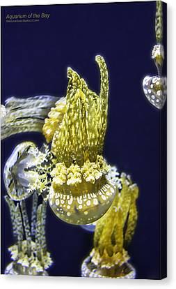 Jellyfish Of Aquarium Of The Bay San Francisco Canvas Print by LeeAnn McLaneGoetz McLaneGoetzStudioLLCcom