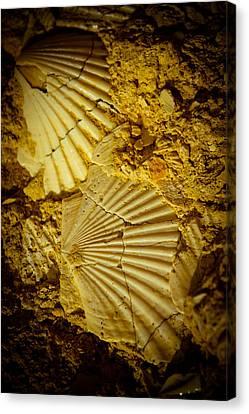 Seashell In Stone Canvas Print by Raimond Klavins