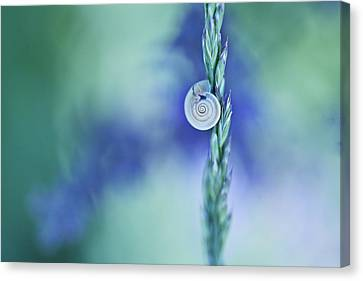 Snail On Grass Canvas Print by Nailia Schwarz