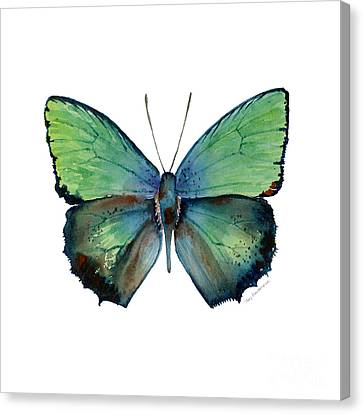 52 Arhopala Aurea Butterfly Canvas Print by Amy Kirkpatrick