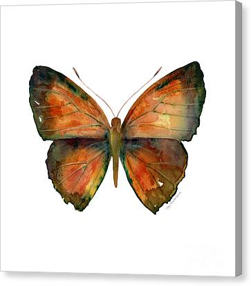 56 Copper Jewel Butterfly Canvas Print by Amy Kirkpatrick