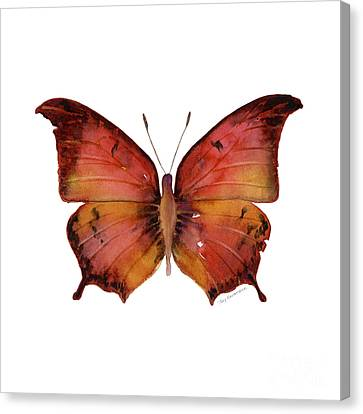 58 Andria Butterfly Canvas Print by Amy Kirkpatrick