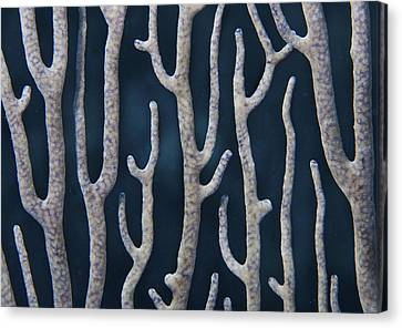Coral Design Canvas Print by Jean Noren