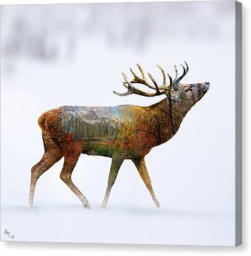 Deer Canvas Print by Mark Ashkenazi