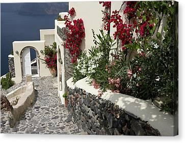 Greece, Santorini, Thira, Oia Canvas Print by Jaynes Gallery