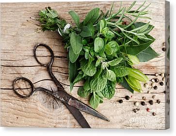 Kitchen Herbs Canvas Print by Nailia Schwarz