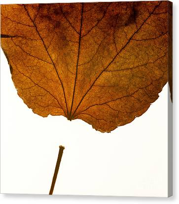 Leaf Canvas Print by Bernard Jaubert