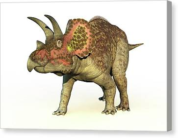 Triceratops Dinosaur Canvas Print by Roger Harris
