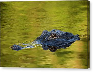 Usa, Florida, St Canvas Print by Jaynes Gallery