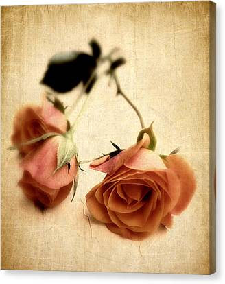 Vintage Rose Canvas Print by Jessica Jenney