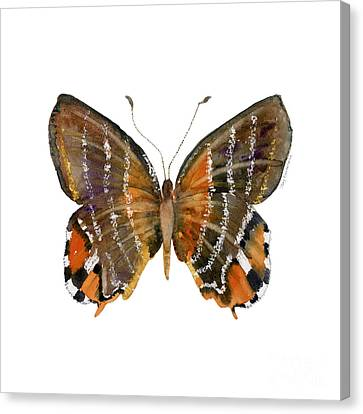 60 Euselasia Butterfly Canvas Print by Amy Kirkpatrick