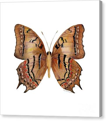 62 Galaxia Butterfly Canvas Print by Amy Kirkpatrick