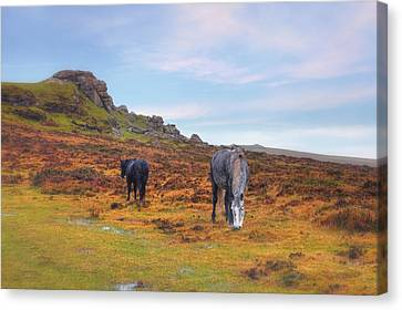 Dartmoor Canvas Print by Joana Kruse