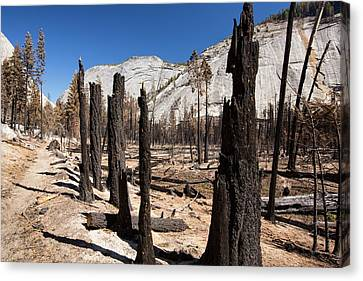 Forest Fire Canvas Print by Ashley Cooper