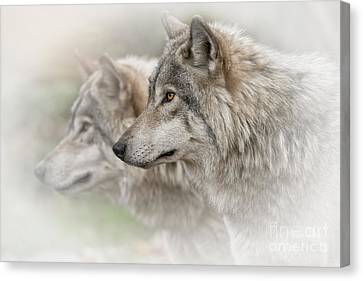 Timber Wolves Canvas Print by Michael Cummings