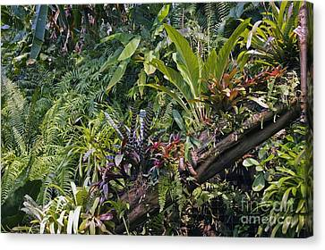 Bromeliad Plant Canvas Print by Dr. Keith Wheeler