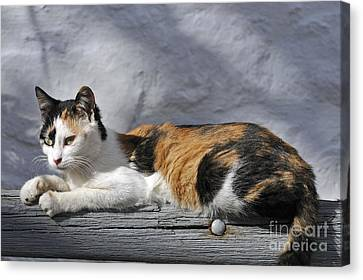 Cat In Hydra Island Canvas Print by George Atsametakis