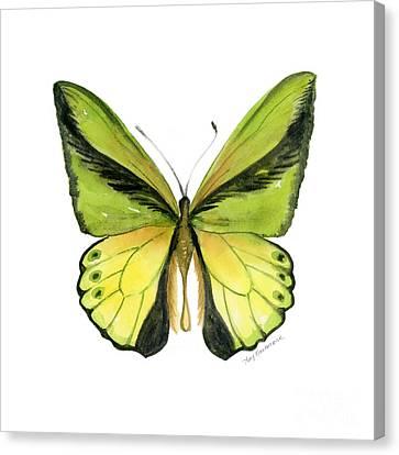 8 Goliath Birdwing Butterfly Canvas Print by Amy Kirkpatrick