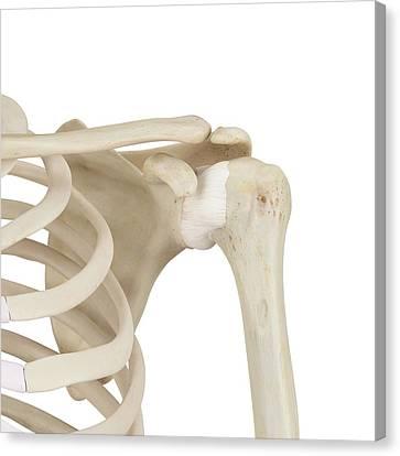 Human Shoulder Bones Canvas Print by Sciepro