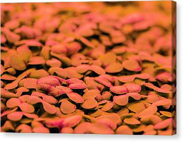 Underground Horticulture Canvas Print by Louise Murray