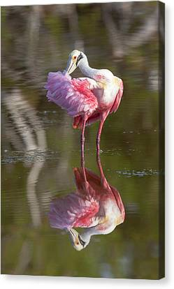 Usa, Florida, Everglades National Park Canvas Print by Jaynes Gallery