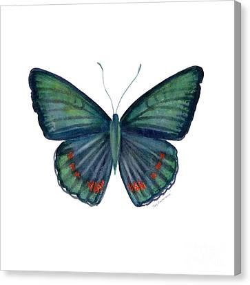 82 Bellona Butterfly Canvas Print by Amy Kirkpatrick