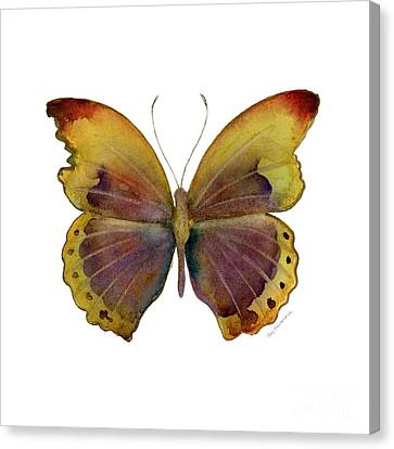 84 Gold-banded Glider Butterfly Canvas Print by Amy Kirkpatrick
