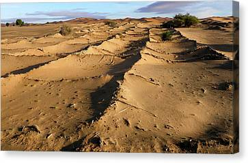 Desertification Prevention Canvas Print by Thierry Berrod, Mona Lisa Production