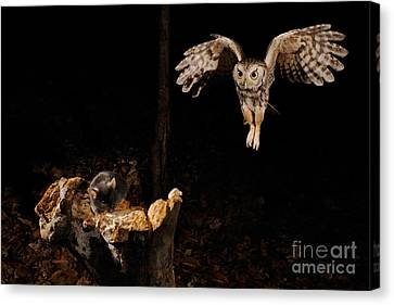 Eastern Screech Owl Canvas Print by Scott Linstead