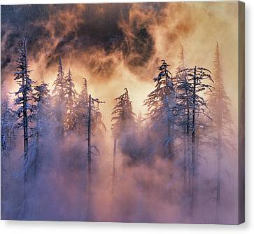 Usa, Oregon, Mt Hood National Forest Canvas Print by Jaynes Gallery