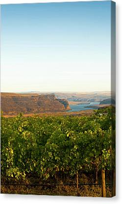 Usa, Washington, Columbia Valley Canvas Print by Richard Duval